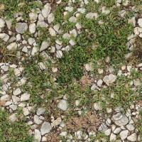 High Resolution Seamless Groundplants Texture 0001