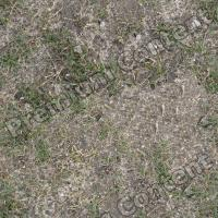 High Resolution Seamless Grass Texture 0005