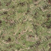 High Resolution Seamless Grass Texture 0001