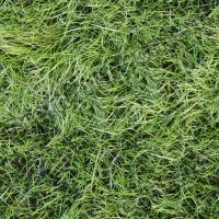 Photo High Resolution Seamless Grass Texture 0001