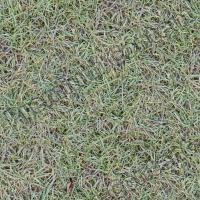 Photo High Resolution Seamless Grass Texture 0003