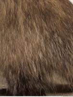 photo texture of fur 0004
