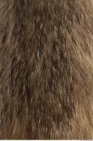 photo texture of fur 0006