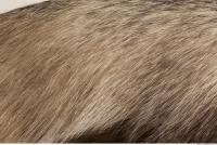 photo texture of fur 0009