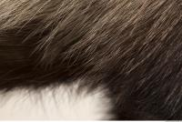 photo texture of fur 0011