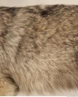 photo texture of fur 0013