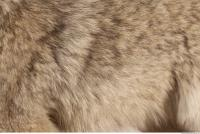 photo texture of fur 0018