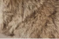 photo texture of fur 0017