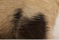 photo texture of fur 0023