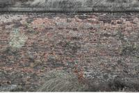 photo texture of wall brick overgrown 0005
