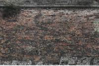 photo texture of wall brick overgrown 0006