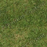 photo texture of grass seamless 0001