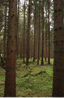 background forest 0010